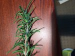 rosemary-on-wood-large